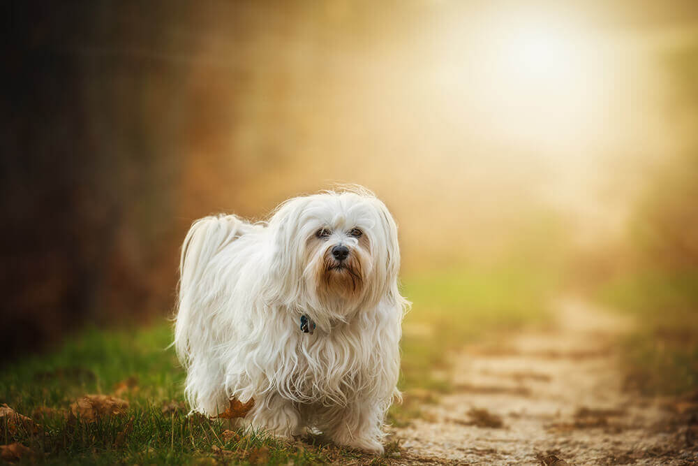 Tails on the Trails – Pet Walk